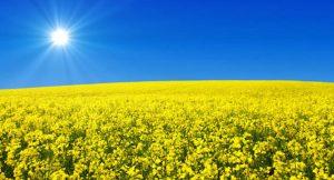 Bio Solarenergie
