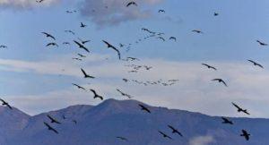 Zugvögel im Klimawandel