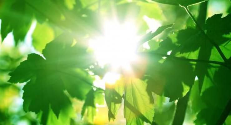 Grüne Blätter und Sonnenschein