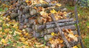 Biokohle aus Holz und Laub
