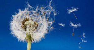 Wind; Foto: shutterstock