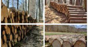 Holz; Foto: shutterstock