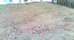 Abholzung in Tansania; Foto: © 2006, Mohsin S. Karmali (Wiki Commons)
