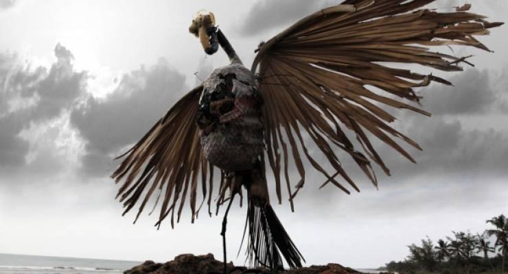 Albatross Exhibitionist; Foto: Skeleton Sea