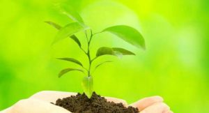 Ecosphere; Bild: shutterstock