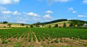 fruchtbarer Boden
