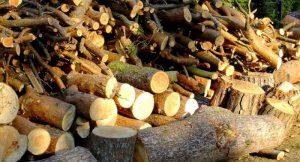 Biomasse: Holz