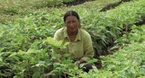Nachhaltige Waldinvestments