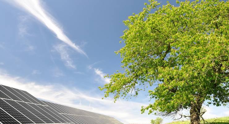 Solarzellen aus Holz