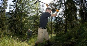 Der Bergwald ist auf freiwillige Helfer angewiesen