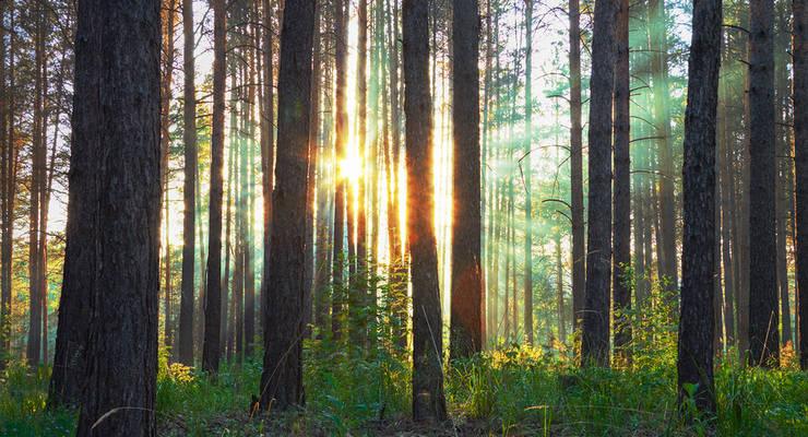 Investitionen in Bäume haben nachhaltigen Bestand
