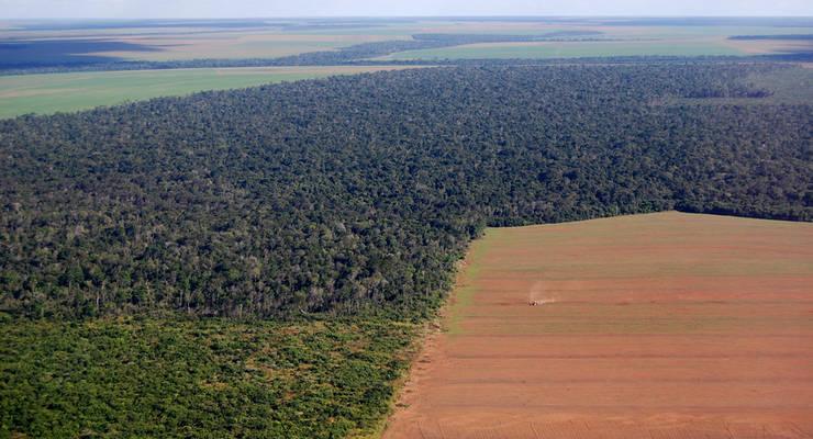 Schutz des Regenwalds