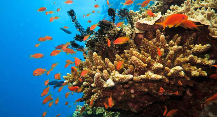Das Great Barrier Riff ist eines der größten Ökosysteme der Welt