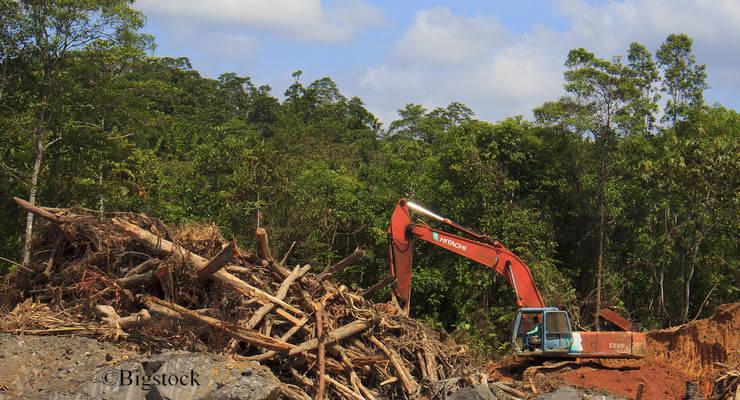 150.000 Hektar Regenwald fallen jedes Jahr der