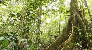 Alle zwei Minuten wird Regenwald von der Größe eines Fußballfelds abgeholzt.