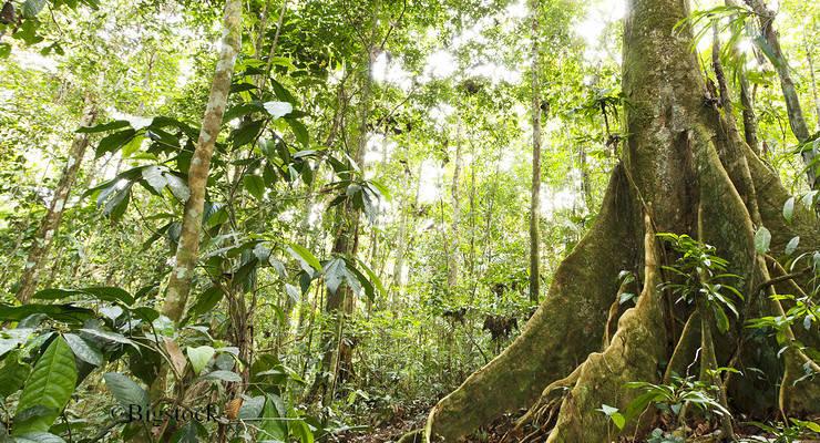 Abholzung Regenwald
