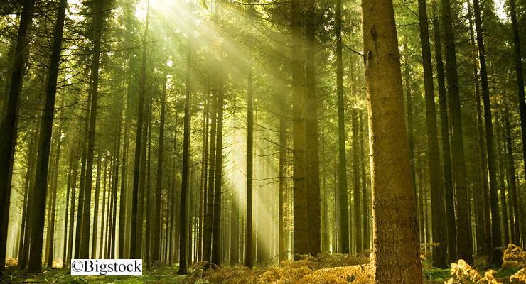 Jährlich eine Milliarde Bäume will BioCarb Engineering pflanzen. Möglich machen soll das ein System von