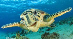 Internationaler Tag der biologischen Vielfalt