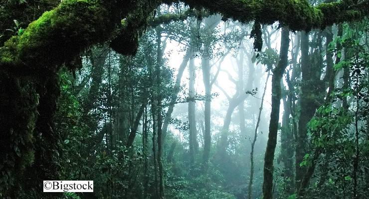illegale Abholzung des Regenwaldes