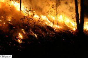 Feuer in weiten Teilen des indonesischen Regenwaldes