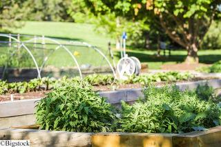 Gemuesegarten urban gardening