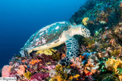 Biodiversität schützt Ökosysteme vor den Folgen des Klimawandels
