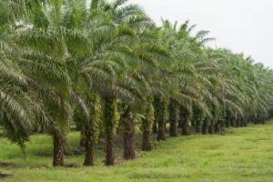 PalmölPalmöl