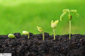 Selbstversorgung - Pflanzen und Saatgut