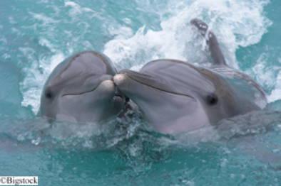 Tierschutz - Delfin-Treibjagden