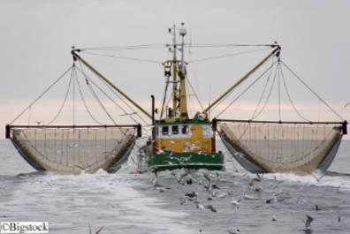 Meere so gut wie leergefischt