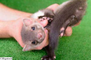 Tierschutz - Schluss mit den Echtpelzen