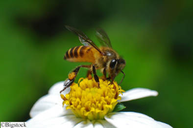 Selbstversorgung - Bienen in der Stadt
