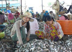 GNF Fischverarbeitung am Tonle Sap See