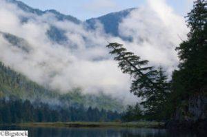 Historischer Sieg für den Waldschutz