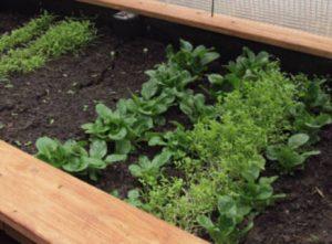 Selbstversorgung - Pflanzen im Februar