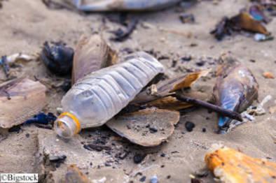 Cleantech -Plastik-fressendes Bakterium
