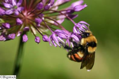Buchtipp: Von der Intelligenz der Bienen