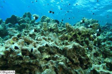 Umweltschutz - Great Barrier Reef