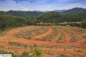 Biodiesel - Palmöl