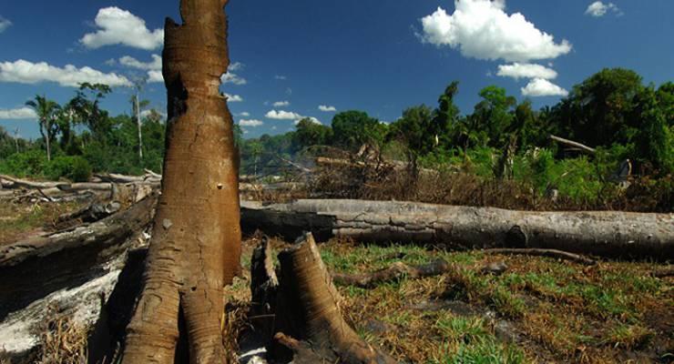 Waldzerstörung Brasilien