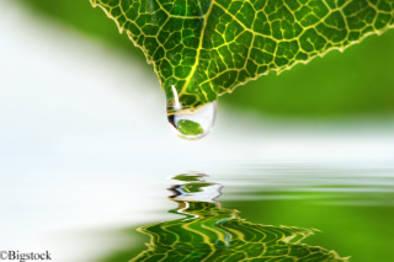 Bionisches Blatt wandelt Sonnenlicht in Treibstoffe um