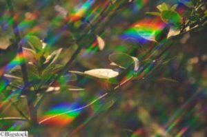 Künstliche Photosynthese bald Wirklichkeit