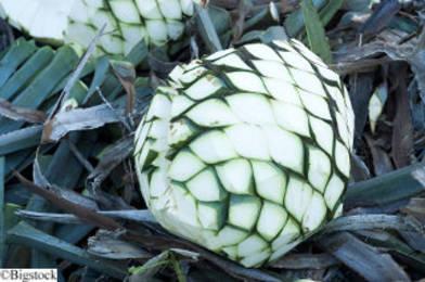 Ford entwickelt Bio-Kunststoff aus Nebenprodukt der Tequila-Herstellung