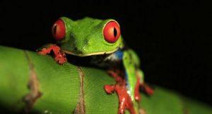 Tierarten bedroht von Klimawandel