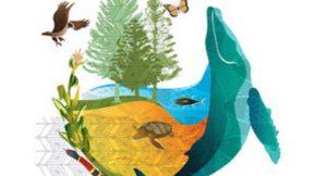 In Cancun für die biologische Vielfalt