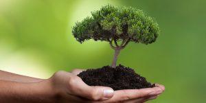 Kabinett beschließt Verbesserung deutscher Nachhaltigkeitsziele