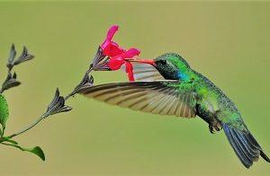 Kolibri Biomimikry Windrad