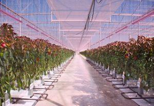LED für Pflanzenwachstum