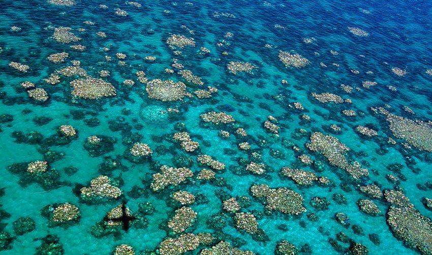 Zwei Drittel des größten Korallenriffs sind beschädigt