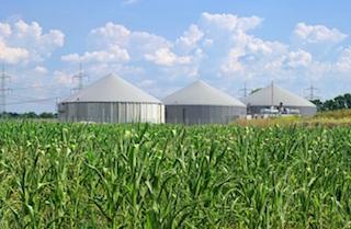 Biomasse als erneuerbare Ressource. Foto: LianeM/iStock/Thinkstock